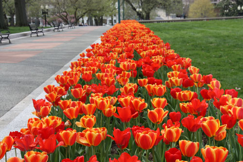 World Travel Photos :: Torontonian :: Washington D.C. - spring time